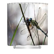 Mating Dragonflies  Shower Curtain