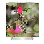 Mating Dragonfly Shower Curtain