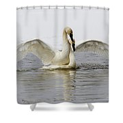 Mating Swans Shower Curtain