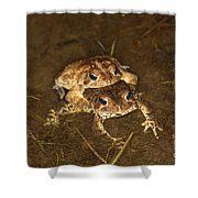 Mating Toads Shower Curtain