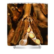 Mature Soybeans Shower Curtain by Science Source