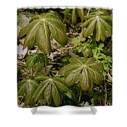 May Apples Shower Curtain