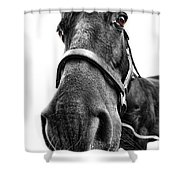 Me So Horsey Shower Curtain