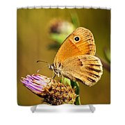 Meadow Brown Butterfly  Shower Curtain