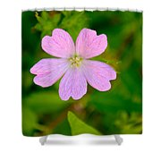 Meadow Checker Mallow Shower Curtain
