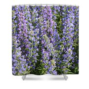 Meadow Sage Flowers Shower Curtain