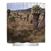 Meadows And Groundsel Trees, Mt Shower Curtain