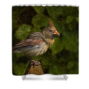 Meal Time Shower Curtain