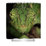 Mediterranean Chameleon Chamaeleo Shower Curtain