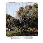 Mediterranean Wood Wiew Shower Curtain
