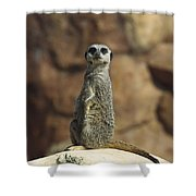Meerkat Suricata Suricatta Sunning Shower Curtain by Konrad Wothe