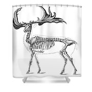 Megaloceros, Cenozoic Mammal Shower Curtain