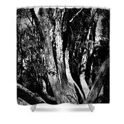 Melaleuca Tree Shower Curtain