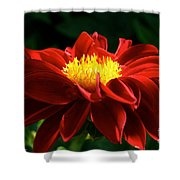Melody Mambo Dahlia Shower Curtain