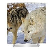 Members Of Wolf Pack Shower Curtain