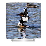 Mergansers All In A Row Shower Curtain