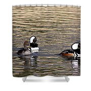 Mergansers Making Waves Shower Curtain