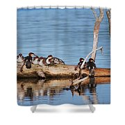 Merganzers Hanging Out Shower Curtain