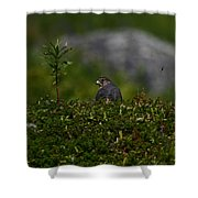 Merlin Grounded Shower Curtain