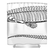 Mesosaurus Brasiliensis Shower Curtain by Science Source