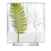 Mexican Cycad Leaf Mexico Shower Curtain