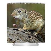 Mexican Ground Squirrel Shower Curtain