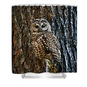 Mexican Spotted Owl Camouflaged Against Shower Curtain