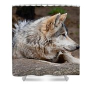 Mexican Wolf Shower Curtain