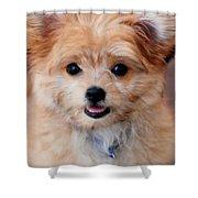 Mi-ki Puppy Shower Curtain