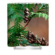 Michigan Cedar Cones Shower Curtain