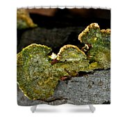 Michigan Jade Fungus Shower Curtain