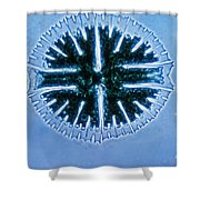 Micrasterias Shower Curtain by Eric V. Grave