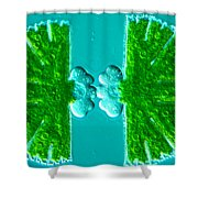 Micrasterias Sp Shower Curtain