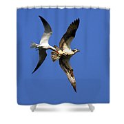 Mid-air Attack Shower Curtain