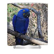 Midnight Blue Shower Curtain
