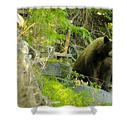 Midway - Backyard Bear Shower Curtain