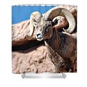 Mighty Big Horns You Have Shower Curtain