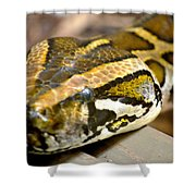 Mighty Python Shower Curtain