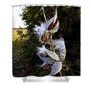 Milkweed Breeze Shower Curtain