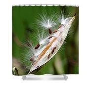 Milkweed Whisper Shower Curtain