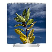 Milkweed Pods Against A Blue Sky Background Shower Curtain