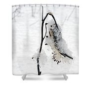 Milkweed Seed Pod In Winter Shower Curtain