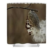 Milkweed Seed Pod Opening Shower Curtain