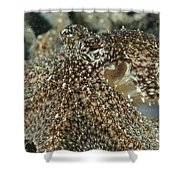 Mimic Octopus Head, North Sulawesi Shower Curtain