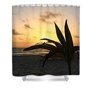 Mini Palm Hugging The Sun Shower Curtain