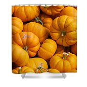 Mini Pumpkins Shower Curtain