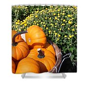 Mini Pumpkins Shower Curtain by Kimberly Perry