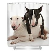 Miniature Bull Terrier Bitch, Lily Shower Curtain by Mark Taylor