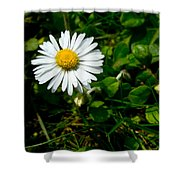 Miniature Daisy In The Grass Shower Curtain