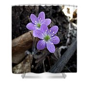 Minnesota Spring Wildflower Shower Curtain